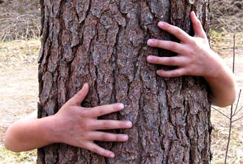 hugging trees can be good for us