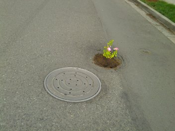 Portland Goes Green On Potholes | kgw.com Portland