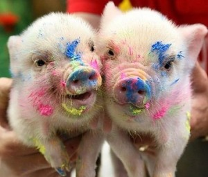 Cute_Piglets_Pictures_10