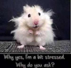 stressed hamster