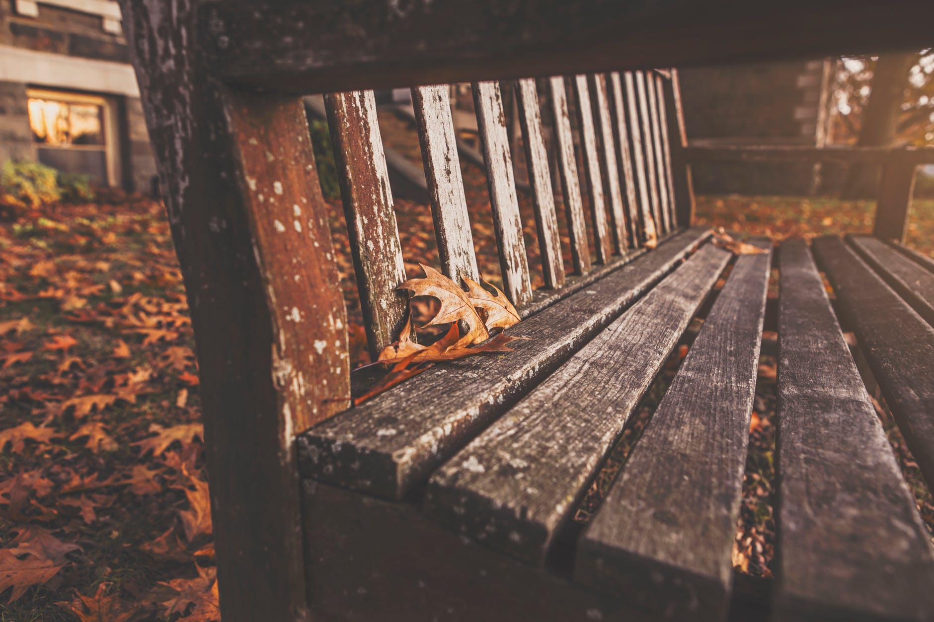 wood bench park autumn
